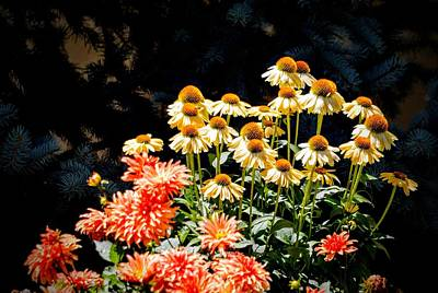 Photograph - A Bright Flower Patch by AJ  Schibig