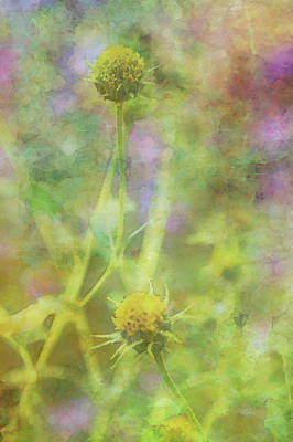 Photograph - A Bright Memory Melting Away 5639 Idp_2 by Steven Ward
