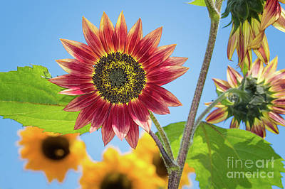 Photograph - A Bright Sunshiney Day by Mimi Ditchie