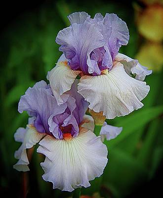 Photograph - A Brilliant Duo Of Iris by Karen McKenzie McAdoo