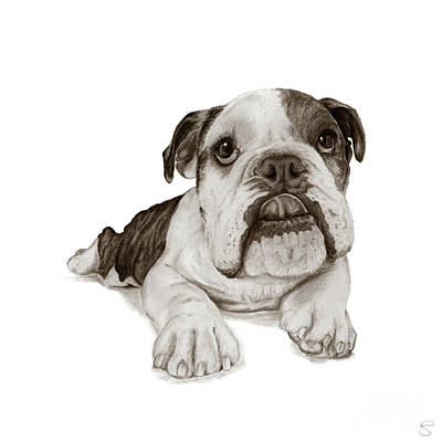 English Bulldog Drawing Digital Art - A Brindle Bulldog Puppy by Stacey May