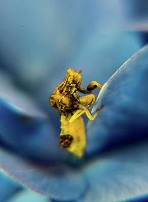 Photograph - A Bug Eyed Bug On Hydrangea Flower Petal by Douglas Barnett