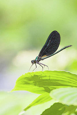 Photograph - A Bug With Shadow by Tatiana Travelways