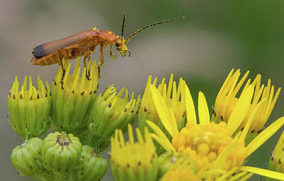 Photograph - A Bugs Life  by Cliff Norton