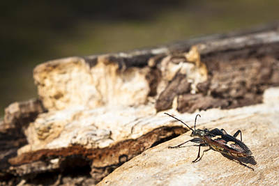 Print featuring the photograph A Bugs Life by Stewart Scott