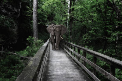 Tree Creature Photograph - A Bull On The Boardwalk by Tom Mc Nemar