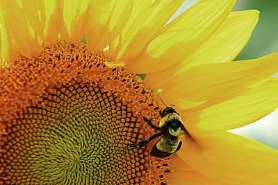 Photograph - A Bumble Bee's Delight by Karen McKenzie McAdoo