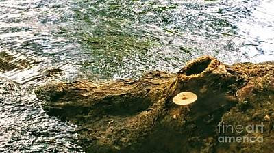 Photograph - A Bump On A Log by Rachel Hannah