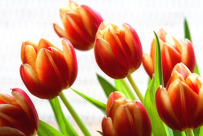 Photograph - A Bunch Of Tulips by Gina Cormier