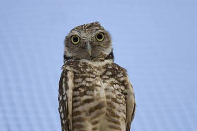A Burrowing Owl Athene Cunicularia Art Print by Joel Sartore