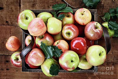 Photograph - A Bushel Of Apples  by Stephanie Frey