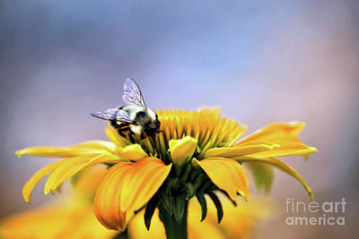 Photograph - A Busy Bee 2 by Victor K