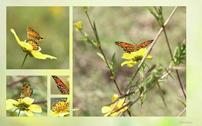 Photograph - A Butterfly Afternoon by Karen Rispin