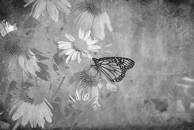 Digital Art - A Butterfly by David Stasiak