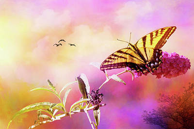 Photograph - A Butterfly Good Morning by Diane Schuster