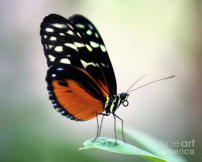 Photograph - A Butterfly Moment by Elizabeth Winter