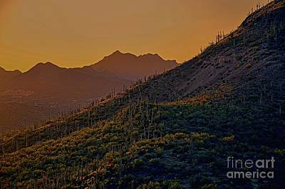 Photograph - A Cactus Sunset by Diana Mary Sharpton