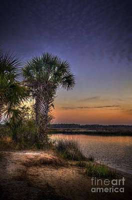 Alligators Photograph - A Calm Reality by Marvin Spates