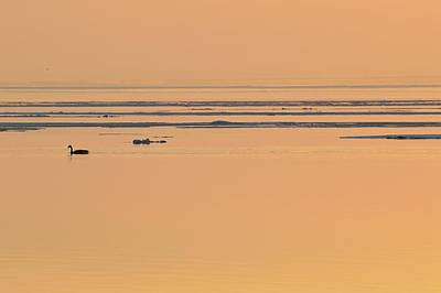 Digital Art - A Canada Goose And Ice Floes At Sunrise  by Lyle Crump