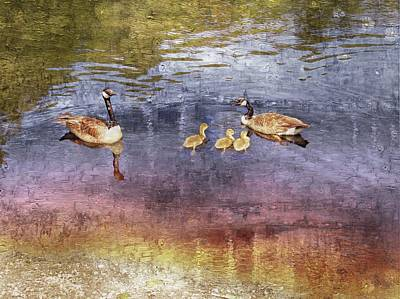 Photograph - A Canada Goose Family With Three Goslings. by Rusty R Smith