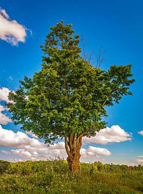 Autumn Photograph - A Canadian Tree by Steve Harrington