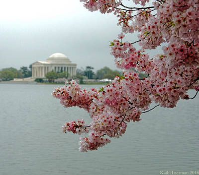 Photograph - A Capital Cherry Blossom II by Kathi Isserman