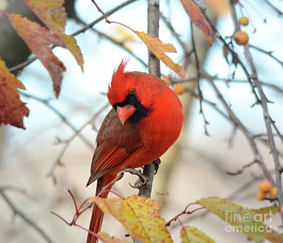Photograph - A Cardinal Kind Of Day by Nava Thompson