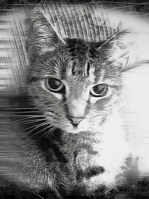 Grey Scale Photograph - A Cat Illustration by Tom Gowanlock