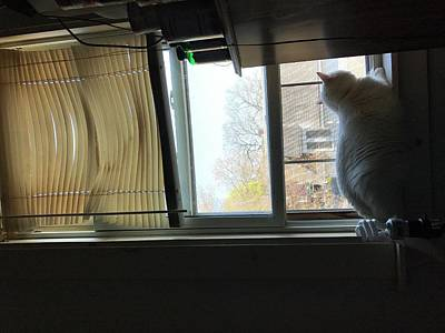Outside My Window Photograph - A Cat Looking At Birds by Janet Gregory