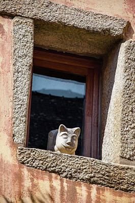Photograph - A Cat On Hot Bricks by Geoff Smith