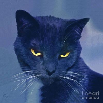 Photograph - A Cat's Dark Night by Gabriele Pomykaj
