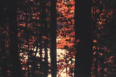 Photograph - A Cause De L'automne by Taylan Apukovska