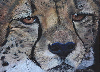 Painting - A Cheetah by Vicky Path