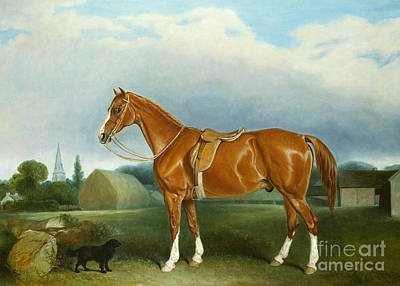 English Horse Painting - A Chestnut Hunter And A Spaniel By Farm Buildings  by John E Ferneley