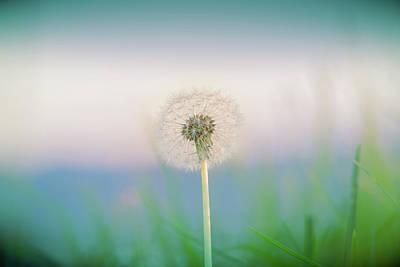 Photograph - A Child's Dream by Bradley Rasmussen