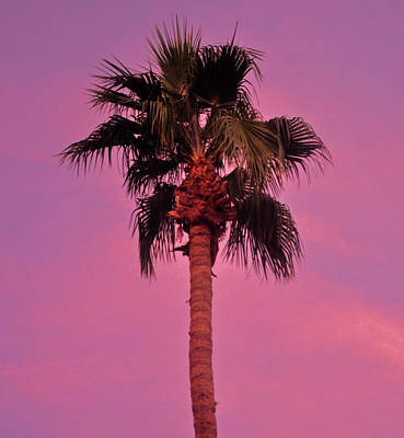 Photograph - A Christmas Palm Tree by Jay Milo