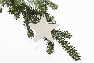 Photograph - A Christmas Star by Diane Macdonald
