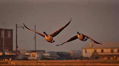 Goose Digital Art - A Cinematic Moment by Jeff S PhotoArt