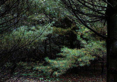 Photograph - A Clearing In The Wild by Kenneth Campbell