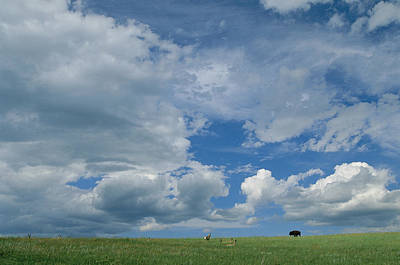 A Cloud-filled Sky Over Pronghorns Print by Annie Griffiths