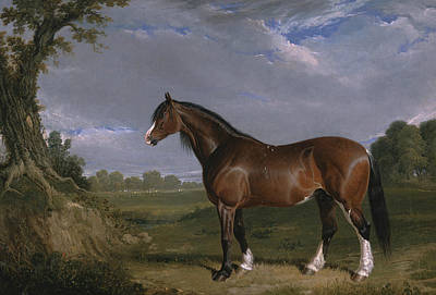 Painting - A Clydesdale Stallion by Treasury Classics Art