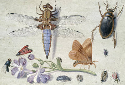 Nature Study Painting - A Cockchafer, Beetle, Woodlice And Other Insects, With A Sprig Of Auricula by Jan Van Kessel