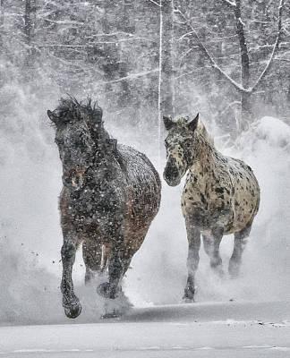 Photograph - A Cold Winter's Run by Wade Aiken