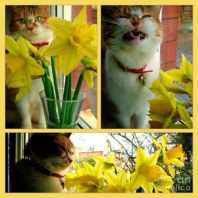 Photograph - A Collage Of Tabitha And The Daffodils by Joan-Violet Stretch