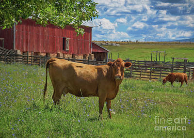 Photograph - A Colorado Cow by Janice Rae Pariza