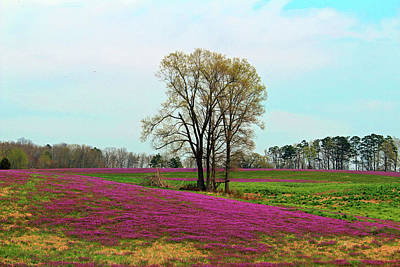 Photograph - A Colorful Field by Cynthia Guinn