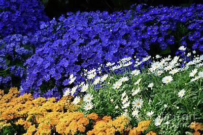 Photograph - A Colorful Garden by Cindy Manero