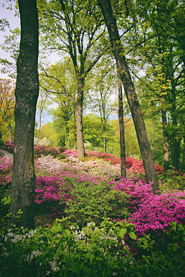 Photograph - A Colorful Hillside by Jessica Jenney