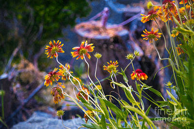 Photograph - Colorful Imaginations Methow Valley Flowers By Omashte by Omaste Witkowski