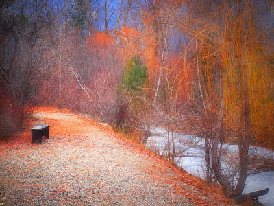 Photograph - A Colourful Winter by Tara Turner
